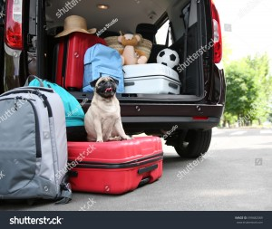 stock-photo-car-trunk-with-cute-pug-and-luggage-travel-concept-599482589
